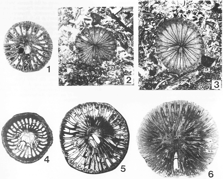 研究テーマ2.刺胞動物の系統と古...